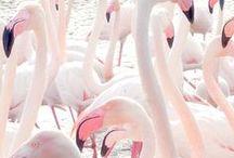 Pink hues...