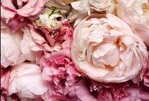 Nuances de rose