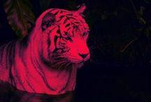Animals : big cats