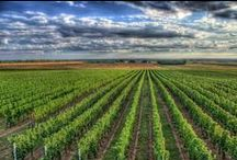 Beauties of South Moravia / All the beauty of South Moravia in one place