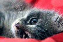 Animals : cats / kittens
