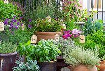 H O M E // garden