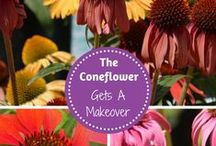 Flower Power / Learn more about the beautiful world of flower gardening. Get our tips and tricks on growing flowers.