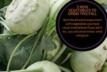 Welcome To The Vegetable Patch / Tips and tricks about vegetable and fruit gardening.