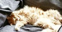 Katzen / Katzen sind wohl mit die süßesten Fellnasen der Welt.  Lilli &Marshi sind natürlich die flauschigsten.. aber es gibt noch andere, putzige Kätzchen