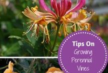 Reach For The Sky / Find out different ways that people use vines in their garden.