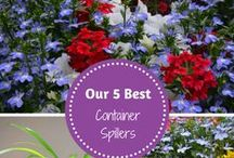 Creative Container Gardening / Tips on container gardening and our favorite flowers for containers.
