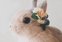 Peter   Rabbit / All things whiskered and fluffy. Beatrix Potter