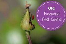 Weed and Pest Control / Tips, Tricks and Products to help with weed and pest control in your garden.