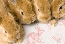 Cute! / Cute stuff we love :)