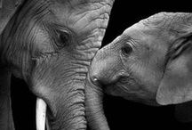 Everything Elephants / by Leslie W