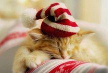 |Christmas Kitties|