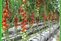Gardening_Hydroponics / Urban Gardening, Hydroponics, Aquaponics