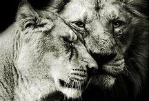 noir et blanc / animaux