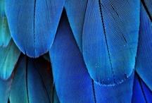 Blue / by Lucretia Wolverton