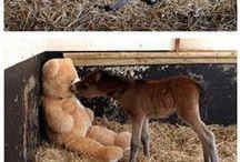 Fur Babies & Fur Baby Fun / by Cara James