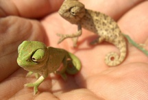 Animals! / Just plain cute! / by Twiggy & Opal