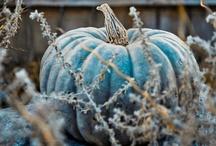Pumpkins Please / by Bridgett Jones