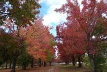 Autumn in Armidale / Beautiful Autumn tones in Armidale, Australia, this 2013