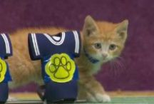 Kitten Bowl II / Sunday 2/1/15 #KittenBowl II is the greatest feline showdown in history!  / by Hallmark Channel