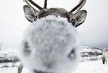 Wintertime & Christmas