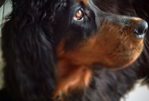 Cachorrada / Vida canina....
