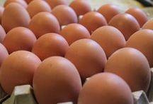 Kananmunat kotihoidossa / Kananmuna kotihoidon innovaationa!