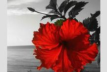 ☆ Colour Splash ✿ڿڰۣ(̆̃̃•