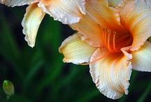 Gardening / by Carolyn Jones