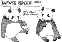 Sleep Funnies