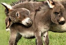 ~Cute Animals~
