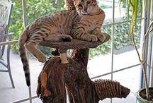Kočičí bydlení