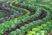 Edible Landscaping / Kitchen Gardens / Why mow a lawn when you can grow edibles? Cultivate fruits, vegetables and herbs in your own edible landscape!