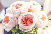 Juliet - David Austin Garden Rose