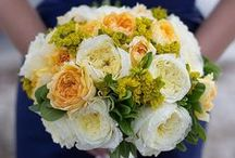 Beatrice - David Austin Garden Rose