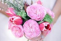 Carey - David Austin Garden Rose