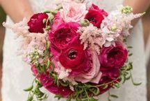 Darcey - David Austin Garden Rose
