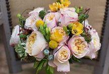 Edith - David Austin Garden Rose