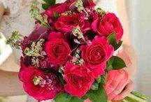 Kate - David Austin Garden Rose
