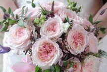 Keira - David Austin Garden Rose