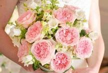 Miranda - David Austin Garden Rose