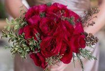Tess - David Austin Garden Rose