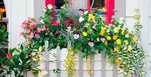 Gardening for Small Spaces / Tips and ideas for urban dwellers or gardeners with small spaces like balconies, windows, side yards, and small patches of earth
