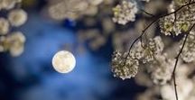 Moon Gardens / A collection of night blooming plants to enjoy the garden after the sun goes down.