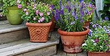 Container Gardening / Ideas for creating container gardens for porches, decks, walkways and more.