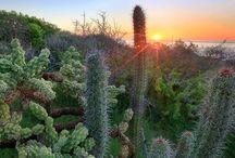 Landscape Los Cabos
