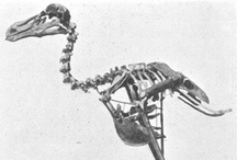 Extinct / not anymore. who. where. when