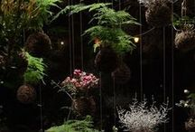 Plants Plans / Inspiring indoor plants and green walls for a healthy room.