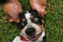 Puppies !!!