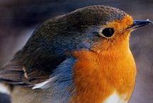 madarak- birds